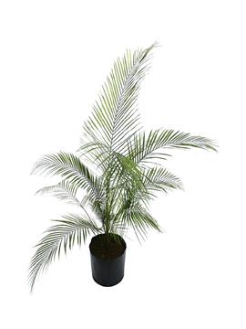 p-palmeira-petropolis